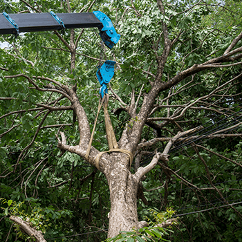 bilambil tree services