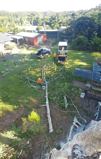 byron shire tree removal