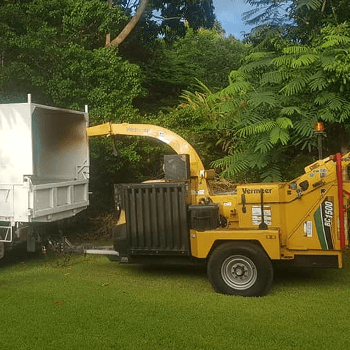 byron shire tree services