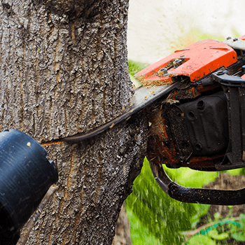 mullumbimby tree removal