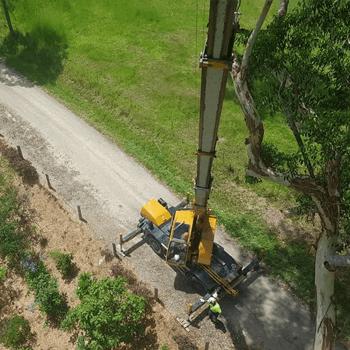 murwillumbah tree removal
