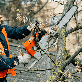 murwillumbah tree services