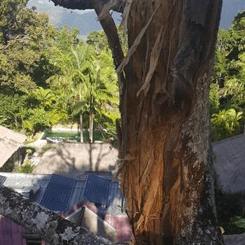 ocean shores tree removal