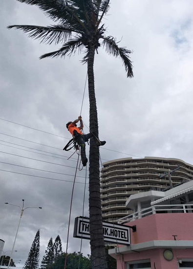 gold coast tree lopping