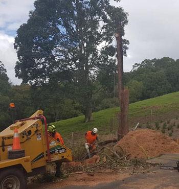 tweed valley tree lopping
