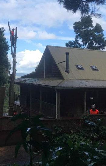 tweed valley tree removal