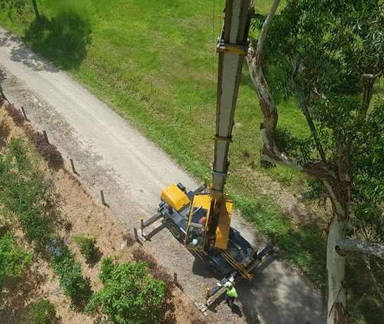 banora point tree removal
