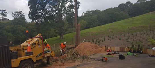 tweed heads tree removal